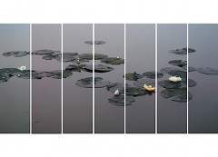 ¤ SUN Jianchun ((né en 1970) UNIFORM LOTUSES EARLY MORNING, 2002, I-VII 7 tirages photographiques