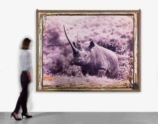 "PETER BEARD Né en 1938 World-record Black Rhino in the Ruhuti River Valley of the Aberdare Forest (Front horn circa 47""), for the En..."