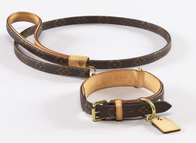 lot collier pour chien