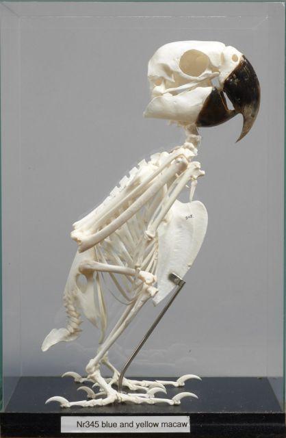 Fishing, Natural History, Curiosities, Pewter | Sale n°2818