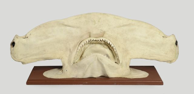 Curiosities Natural History, Taxidermy, Raoul le Dart
