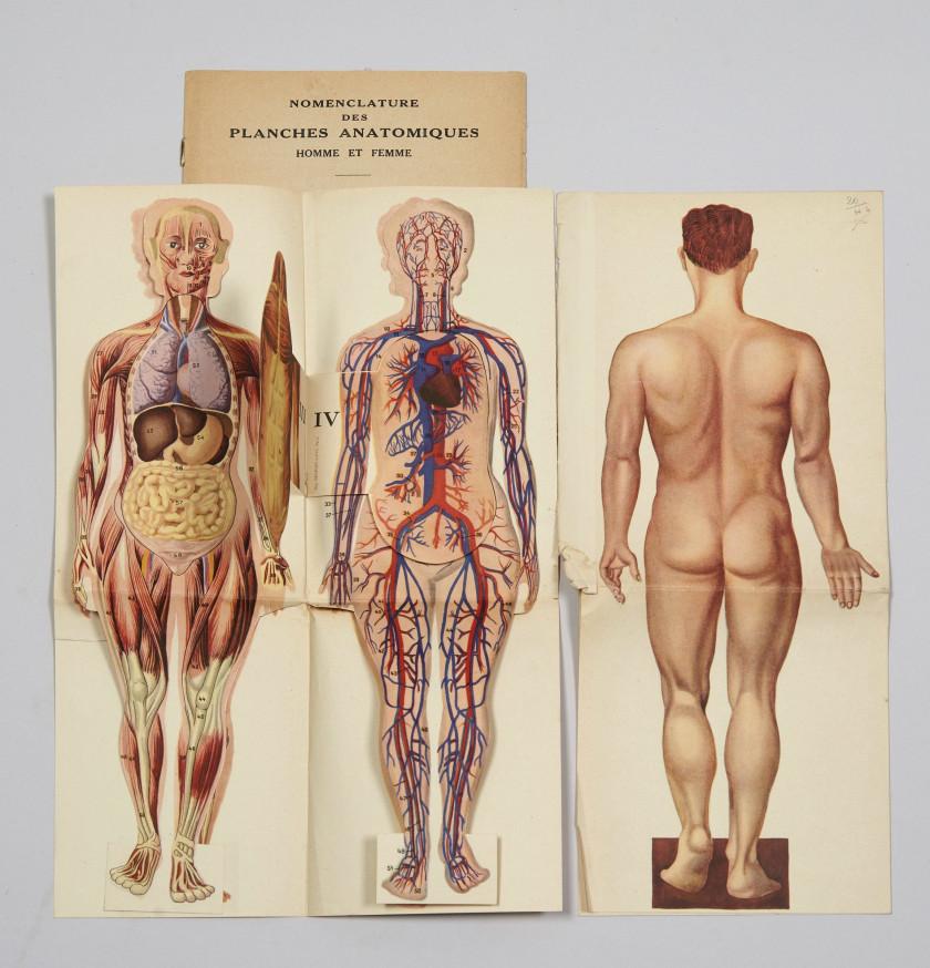 Pharmacy, Tins, Natural History | Sale n°3166 | Lot n°65 | Artcurial